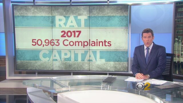 Chicago Named The 'Rat Capital' Of The U.S., Study Says