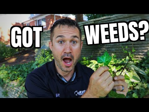 How to Get Rid Of Weeds in Flower Beds | Gardening Tips for Homeowners and Landscapers | Tutorial