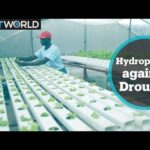 Farmer in Zimbabwe turns to hydroponics to beat severe drought