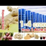 Earn 1-4 Crores with Ginger Vertical Farming