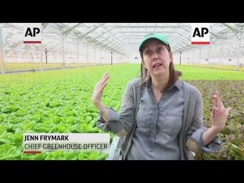 Giant Rooftop Greenhouse Sprouts in Chicago