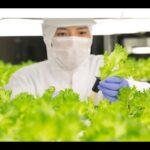 Future of Vertical Farming