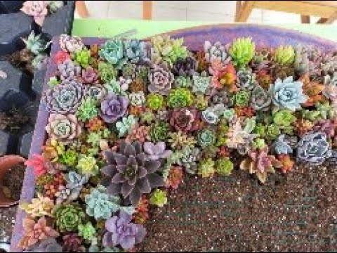 Sukulentlerle dikey bahçe / DIY Vertical Succulent Garden-Succulent Pot Making/Diy