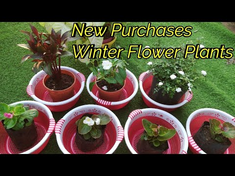 New Purchases Of Winter Flower Plants with Rates