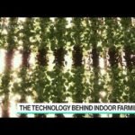 Vertical Farming to Prevent Food Loss in a Disaster