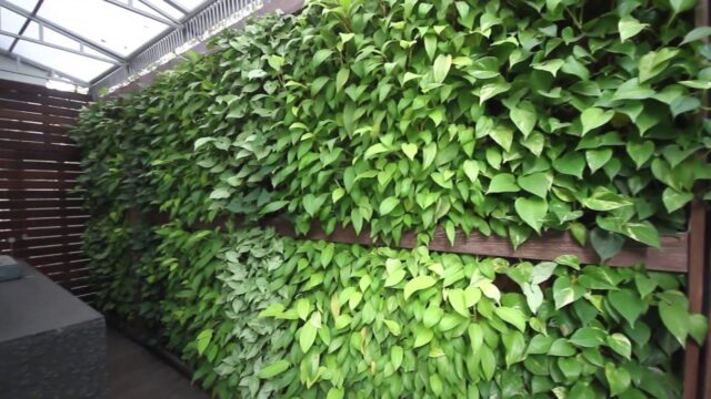 Vertical Gardens & Green Walls – Natura Urban Plantscaping