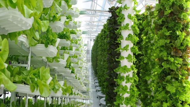 Extremely High-Tech Indoor Farming Is On The Rise Now