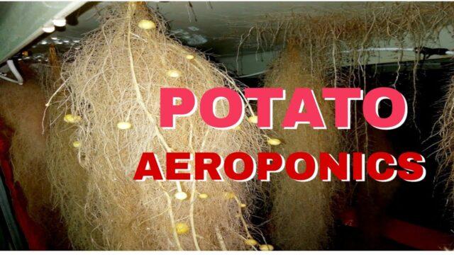 POTATO AEROPONICS SYSTEM