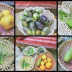 Harvesting Vegetables from My Terrace Garden    By School of Gardening  