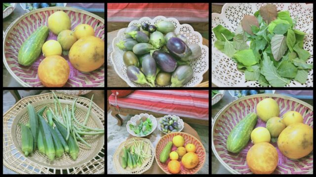 Harvesting Vegetables from My Terrace Garden || By School of Gardening||