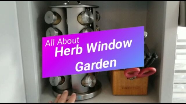 All About: Windowsill Herb Garden Kit