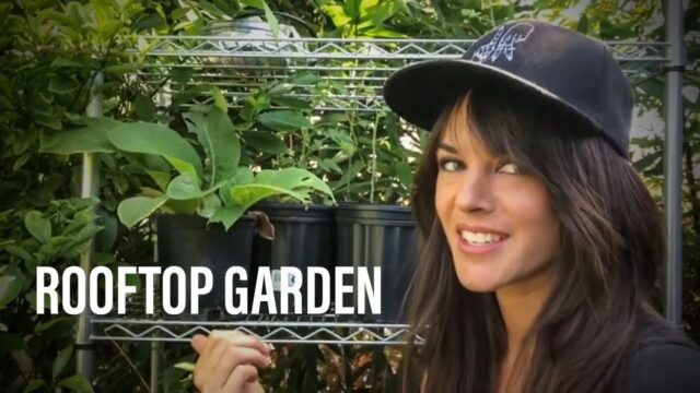 Urban Rooftop Garden Summer Tour – West Hollywood