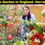 Vegetable Garden- Harvesting Day Oct 2020 (Part 1)  Indian Youtuber in England  Sangwan family