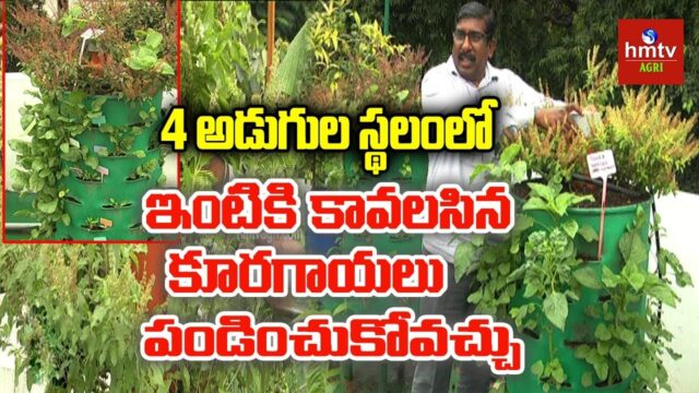 Tower Garden In Balcony By Ravi Chandra | Balcony Gardening | hmtv Agri