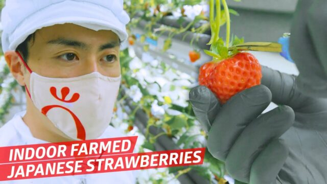 How This Indoor Vertical Farm Makes Perfect Japanese Strawberries — Vendors