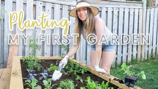 Planting My First Vegetable Garden | Small Backyard Gardening