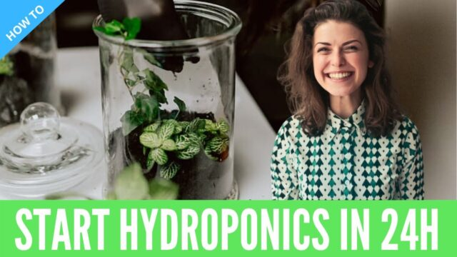How to Make Indoor Hydroponic Systems at Home | DIY Gardening Ideas & Hacks for Beginners 2020