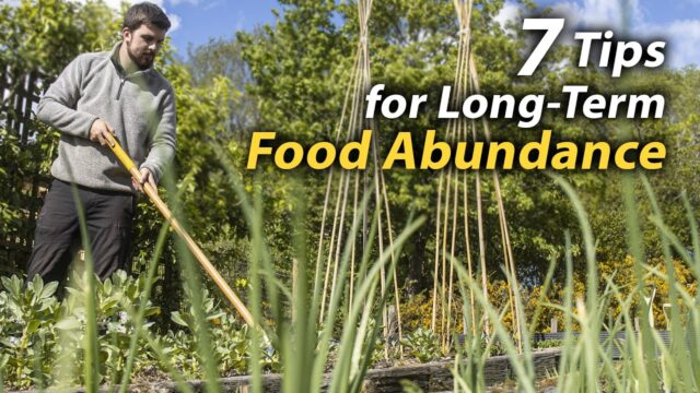 Improve Your Vegetable Garden's Food Abundance | Ideas and Skills That Make a Difference
