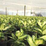 Costa Farms Corporate Video