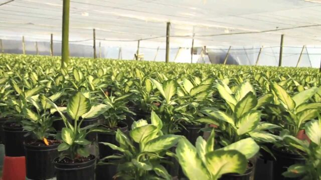 Costa Farms Corporate Video