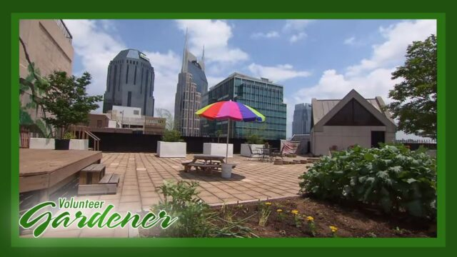 McKendree UMC Community Rooftop Garden | Volunteer Gardener