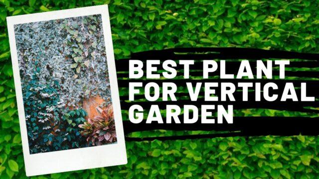 BEST Plants for Vertical Garden/ Greenwall/ Vertical Greenery