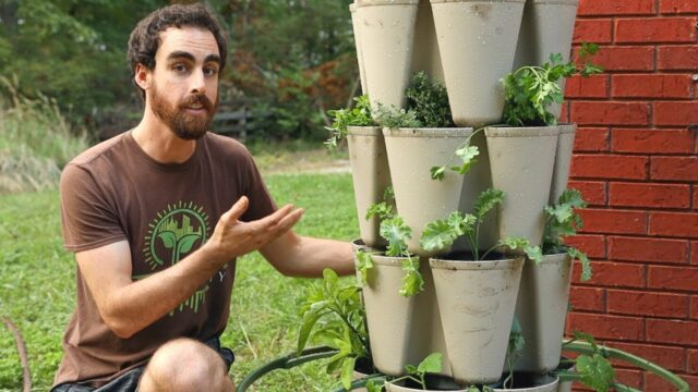 Vertical Gardening: Grow More Food in Less Space