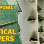 How to Grow Hydroponic Strawberries on Vertical Towers