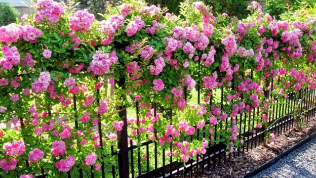 60 Beautiful Fence Planters (Decorate Your Garden Fence)