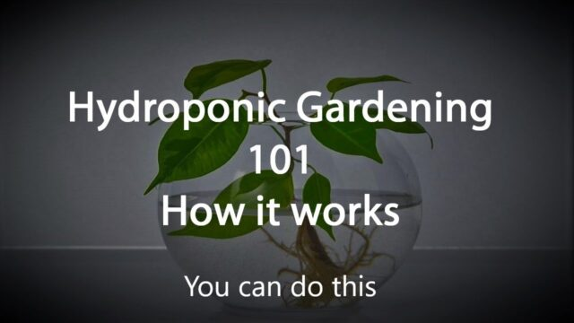 Hydroponics 101 Explained