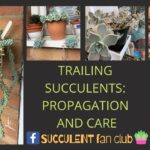 Trailing and Hanging Succulents Care and Propagation How To