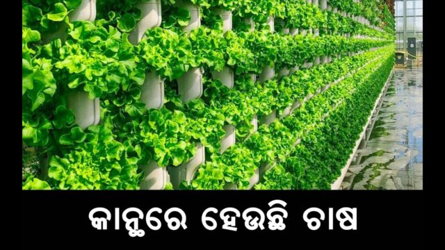 "How Vertical Farming Works | "" କାନ୍ଥରେ ହେଉଛି ଚାଷ "" Next Gen Farming Without Soil"