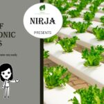 Types of hydroponic Systems || Types of hydroponic farming || Tutorial Hydroponics || Soil less