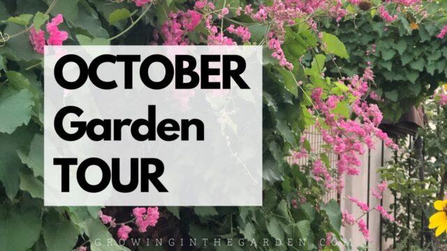 OCTOBER GARDEN TOUR – Mesa, Arizona Garden, Zone 9b