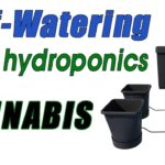 Self Watering Cannabis Grow with AutoPot – Easy / Affordable Hydroponic Growing Setup for Marijuana