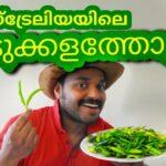 ഓസ്ട്രേലിയയിലെ ഞങ്ങളുടെ അടുക്കളത്തോട്ടം Our Vegetable garden  Malayalam vlog by Australian Mallu