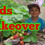 Shokher Bagan 2019 – Homegrown Strawberry Picking – Kids Garden Takeover, Kids Gardening
