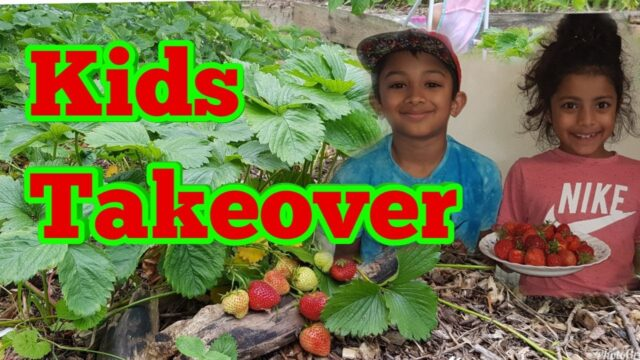 Shokher Bagan 2019 – Homegrown Strawberry Picking – Kids Garden Takeover, Kids Gardening
