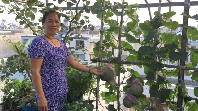 Amazing Rooftop Garden of  Vietnamese Housewife – Urban Rooftop Garden