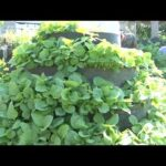 A Group Of Youth Venture In Vertical Farming