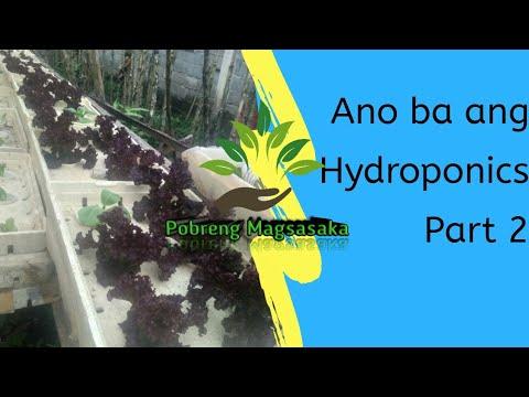 What is Hydroponics: Ano ba ang Hydroponics, Tips at mga kailangan sa hydroponics  (Part 2)