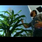 Fresh for Florida Kids Food Garden – Growing Corn