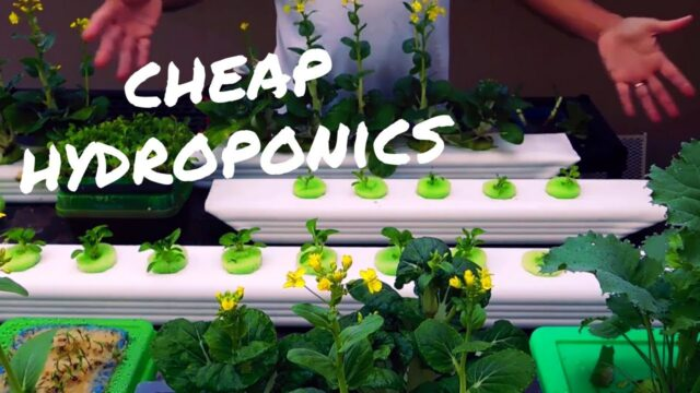 DIY Hydroponics / Cheap and Easy