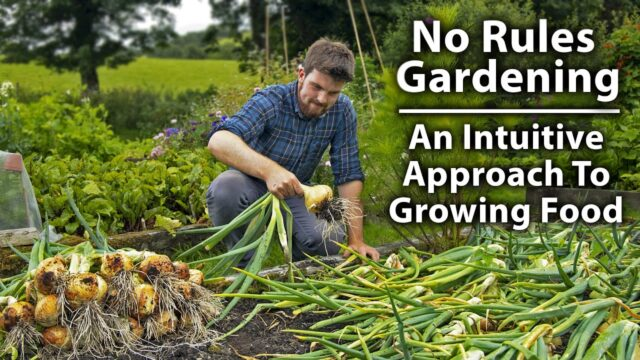The NO RULES Vegetable Gardening Method | 9 Key Lessons from a Year of Growing Intuitively