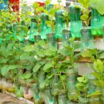 Growing Vegetables at Home with Automatic Watering, Vertical Vegetable Garden Ideas