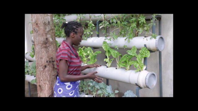 "African Tech 4 Good | Elizabeth, Kenya ""Vertical Garden"" #AfricanTech4Good #tvebiomovies"