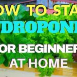 HOW TO START HYDROPONICS FOR BEGINNERS AT HOME