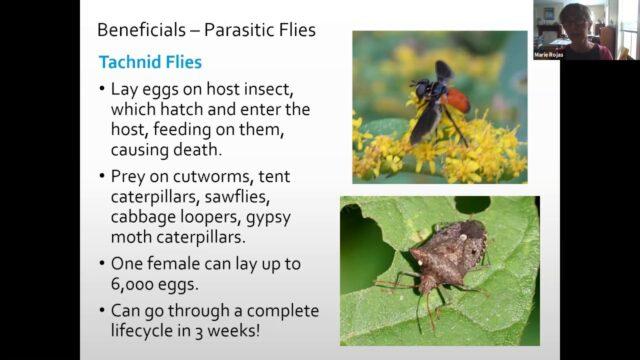 Bees, Beneficials, and Blooms – Master Gardener Webinar