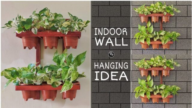 simple indoor wooden wall hanger| indoor wall hanging idea | with money plants
