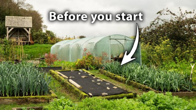 Creating a Vegetable Garden? 3 Things You Can't Afford to Ignore
